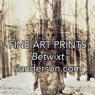Fine Art Prints - Betwixt