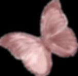 IMG_9582_edited_edited_edited_edited_edi