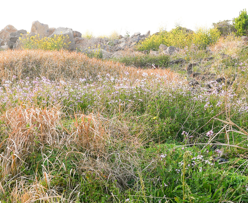 풀과 흙무덤