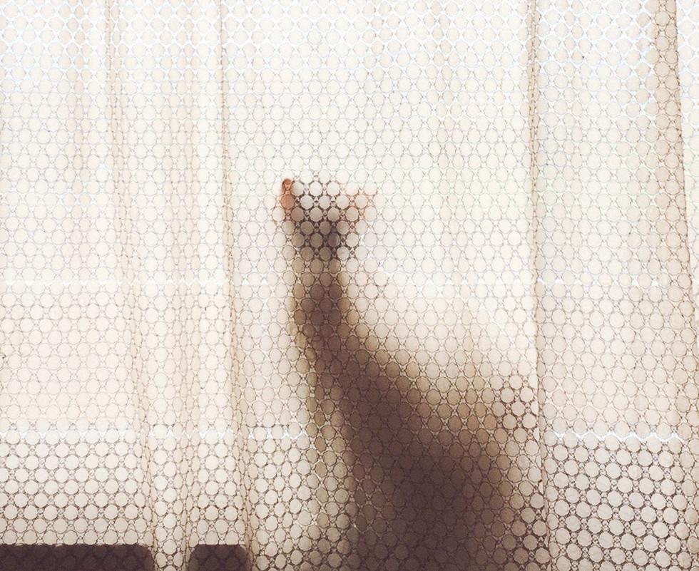 까마귀떼를 보는 고양이