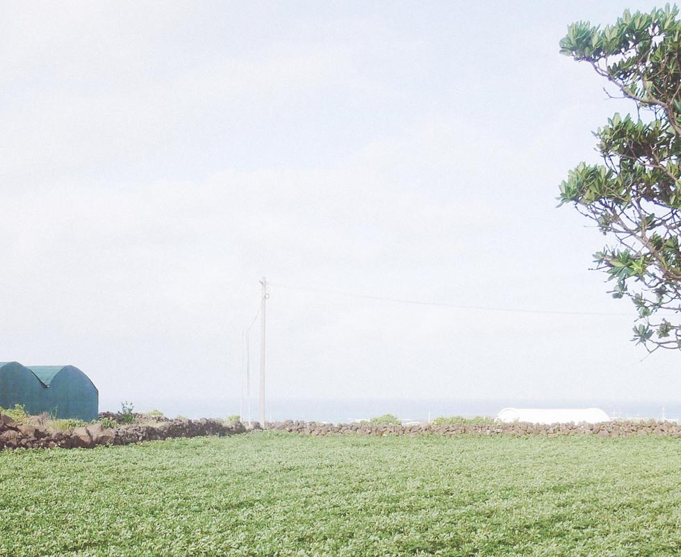 나무와 땅콩밭