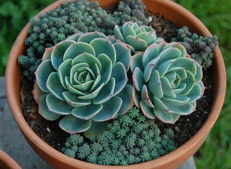 8 Surprising Health Benefits of Having Succulents in Your Home