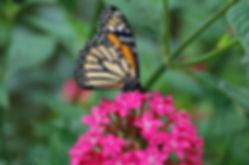 butterfly-garden-costa-rica-A-.jpg