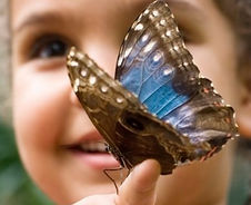 Children's Butterfly Experience with Sar