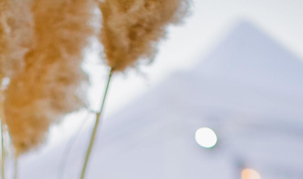 Shine Edit .jpg