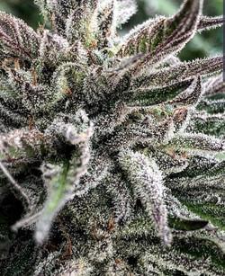 Plant_Kosher-OG-600x739.jpg