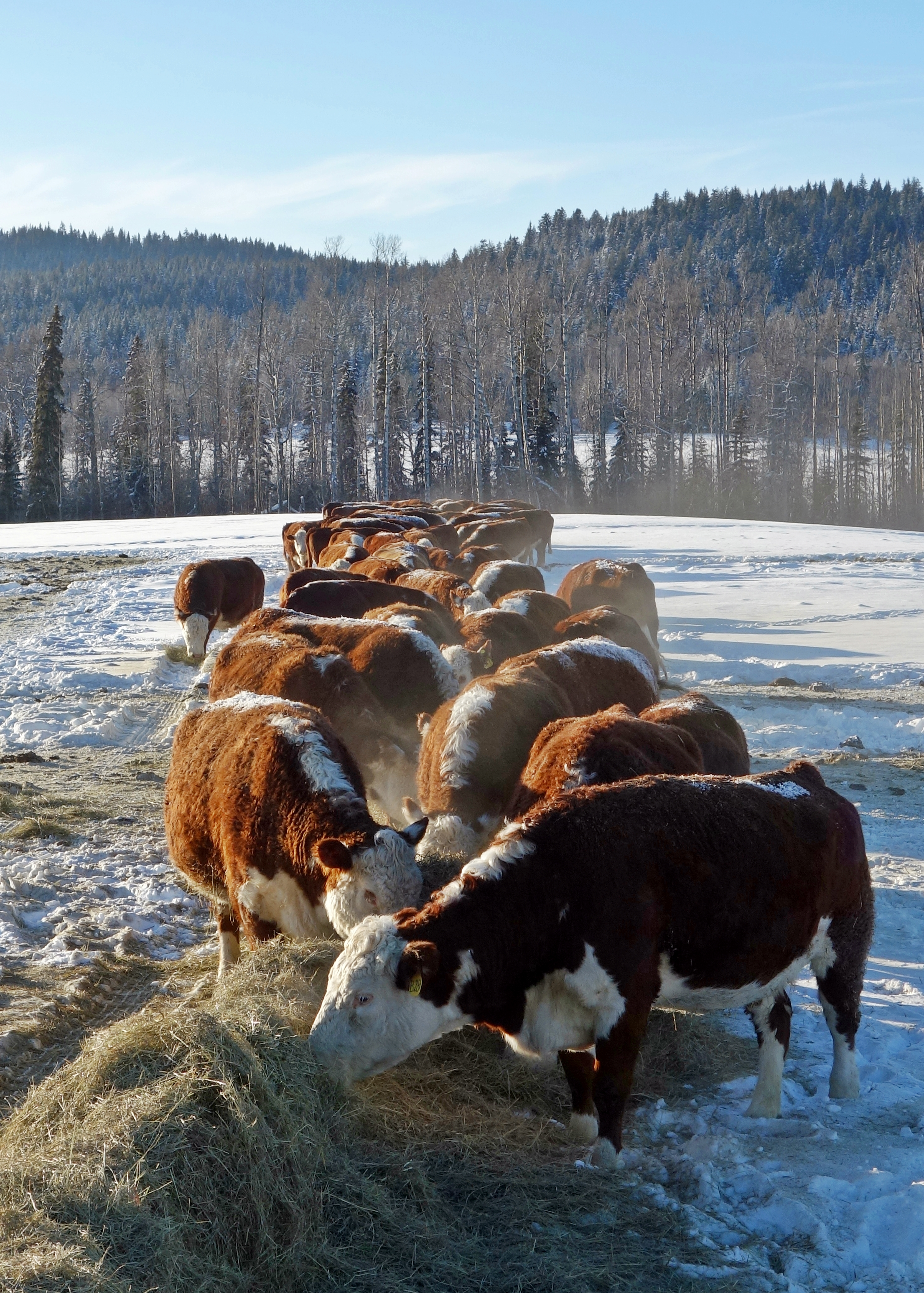 feed row