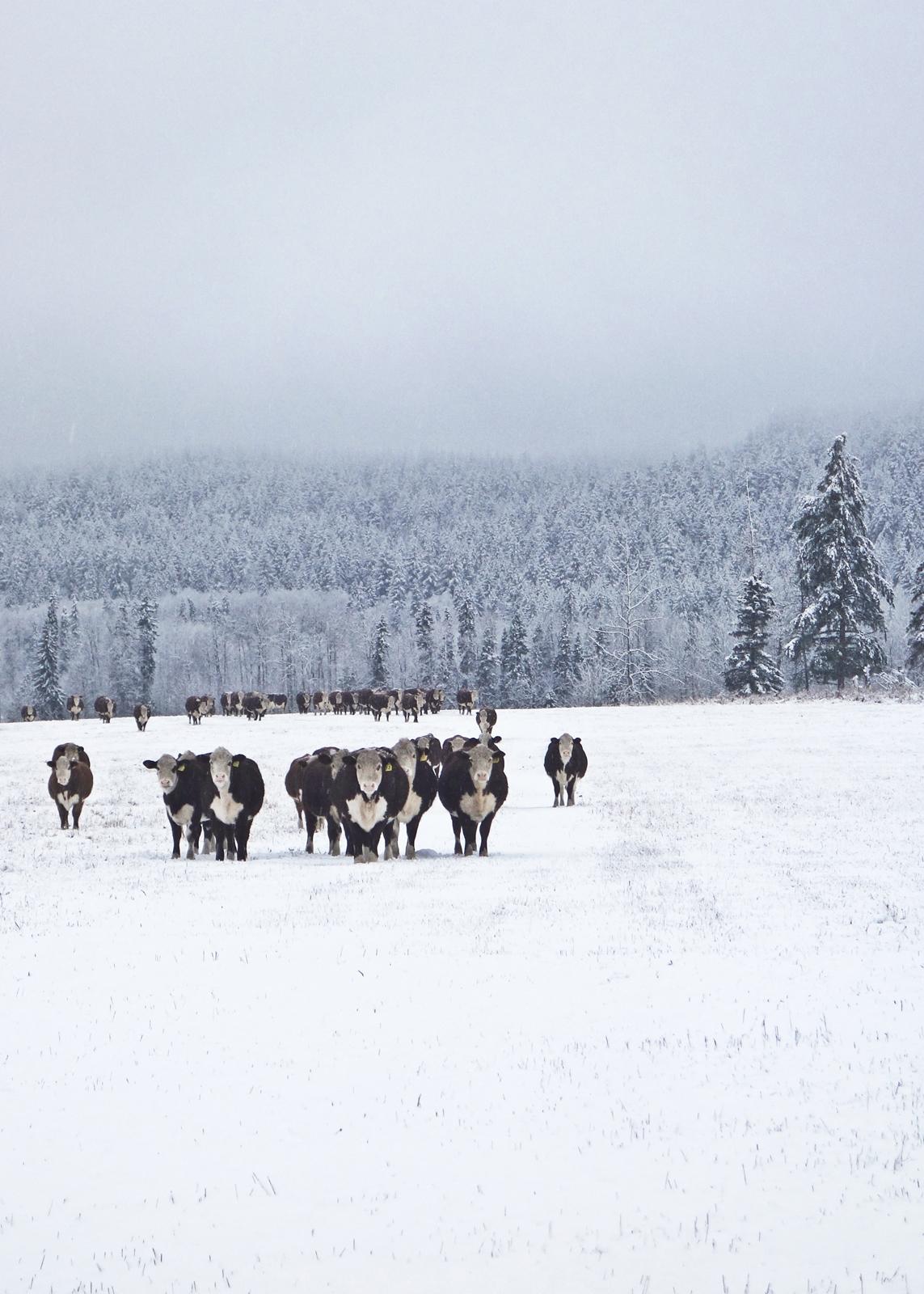 Winter 2 - sml