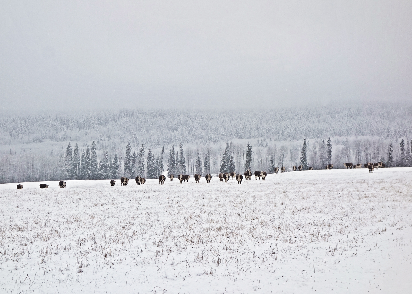 winter-sml