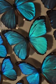 構造色と生物模倣化学