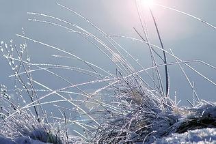 winterlich_200965.jpg