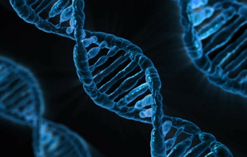 gènes ADN
