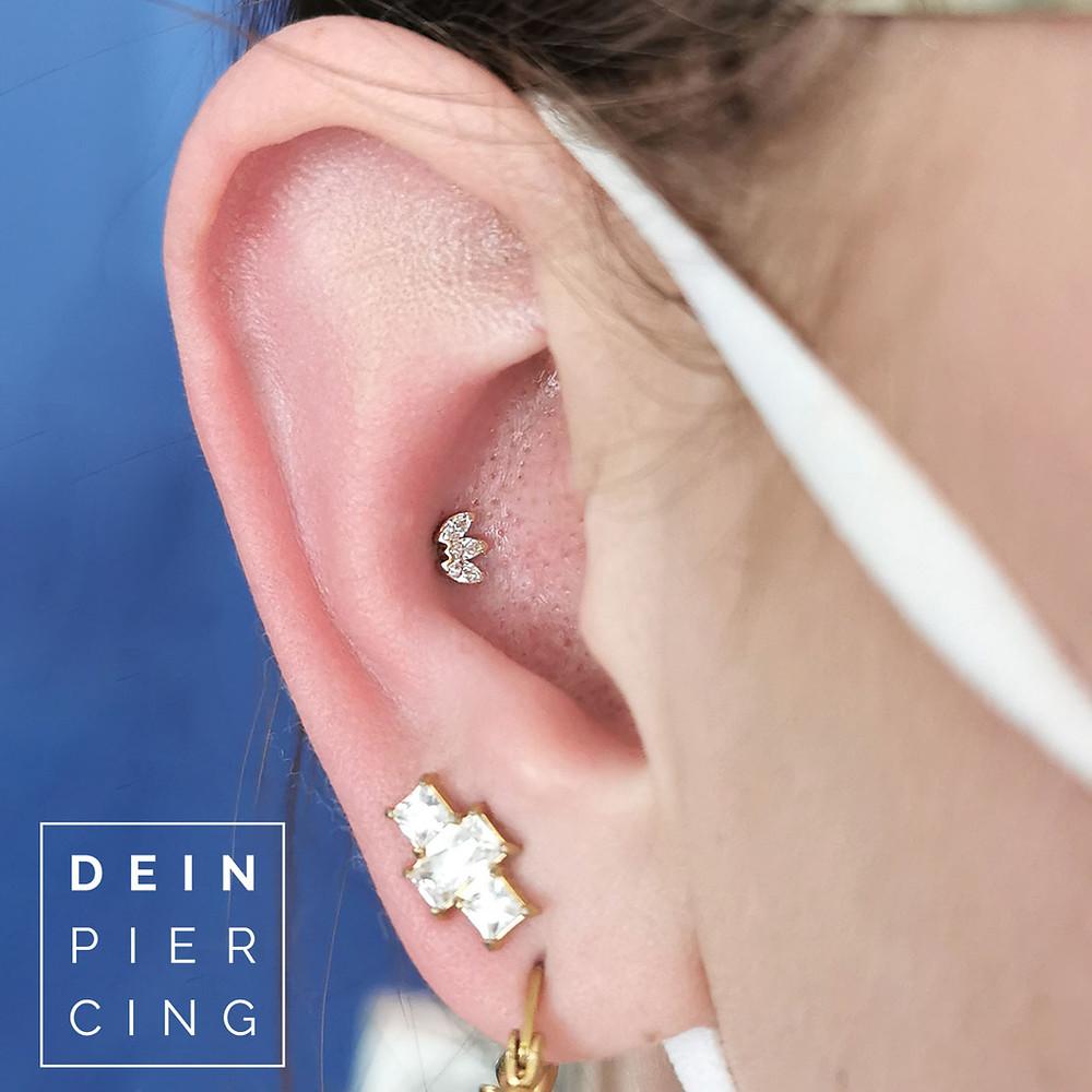 Conch Piercing BVLA