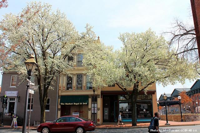 street in spring in Frederick MD