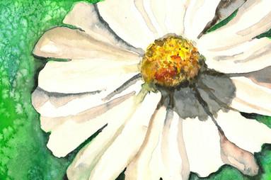Margarita Flower