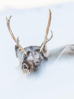 "Fine art print ""Antlers"""