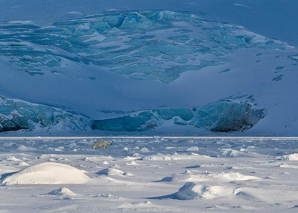 """Fine art print """"Life On Ice"""""""