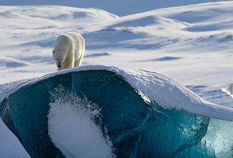 freya svalbard spitsbergen spitzbergen eisbär