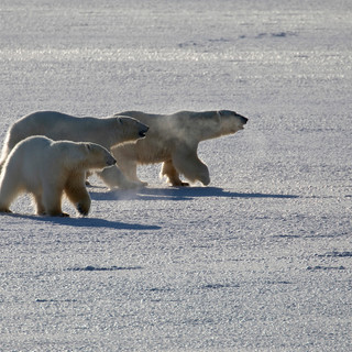 Arctic_MelFred_a_jun2018_049.jpg