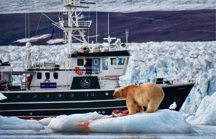 expedition spitzbergen polar bear eisbär