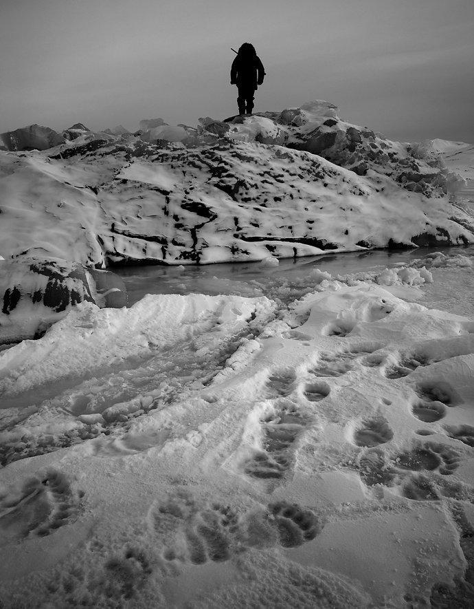 Fredrik Granath polar bear arctic svalbard Melissa Schäfer