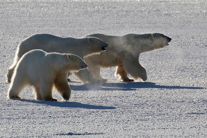 Polar bear book Melissa Schäfer Fredrik Granath