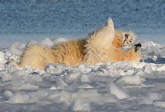 svalbard spitsbergen expedition cruise
