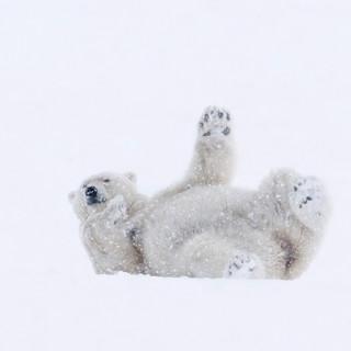 Arctic_MelFred_a_jun2018_014.jpg