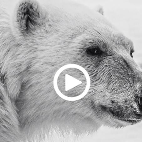 Polar Tales event