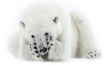origo polarquest svalbard wild photo