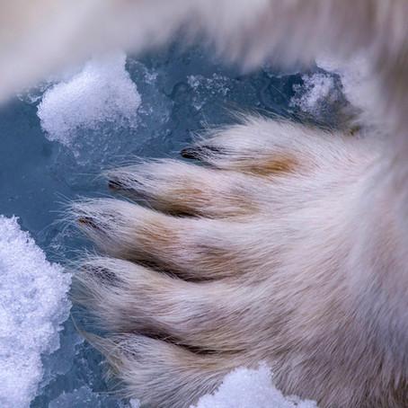 Polar Tales!