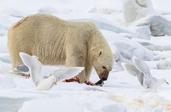 Polar tales bortom isbjörnens rike book bok