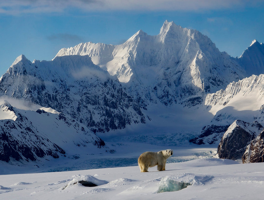 polar bear expedition photography cruise freya spitzbergen
