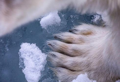 Polar_tales_20_melissa_schaefer.jpg