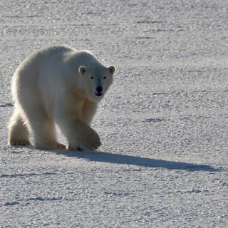Arctic_MelFred_a_jun2018_056.jpg
