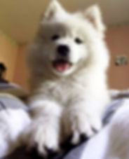 Nanuk, Samoyed, The Motherbear