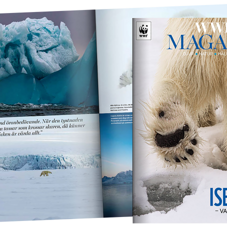 Interview about our book, bears, ice and future