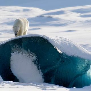 Arctic_MelFred_a_jun2018_005.jpg