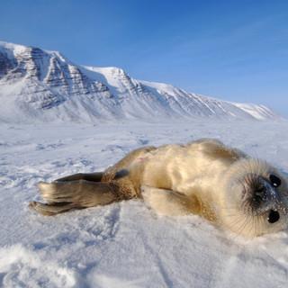 Arctic_MelFred_a_jun2018_006.jpg