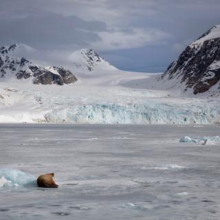 Arctic_MelFred_a_jun2018_030.jpg