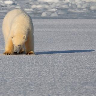 Arctic_MelFred_a_jun2018_036.jpg
