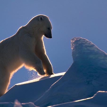 Svalbard 2021 - new date