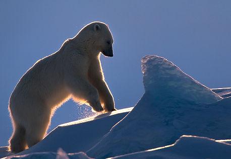 Polar_tales_17_fredrik_granath.jpg