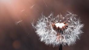 Ein Samenkorn pflanzen, für eine neue Welt - Botschaft aus der geistigen Welt vom 15. März 2021
