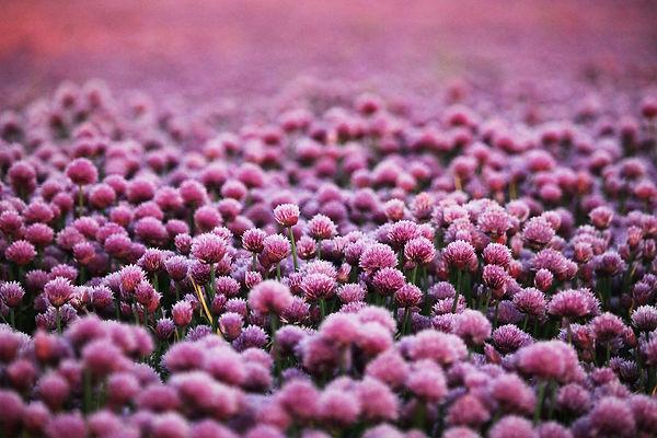 purple-5935577_1920.jpg