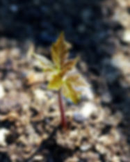 growth-621090_1280.jpg