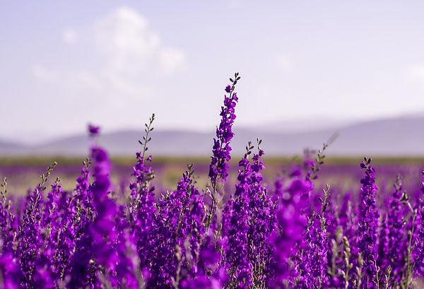 flowers-5383054_1920.jpg