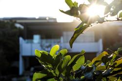 newport residence leaves