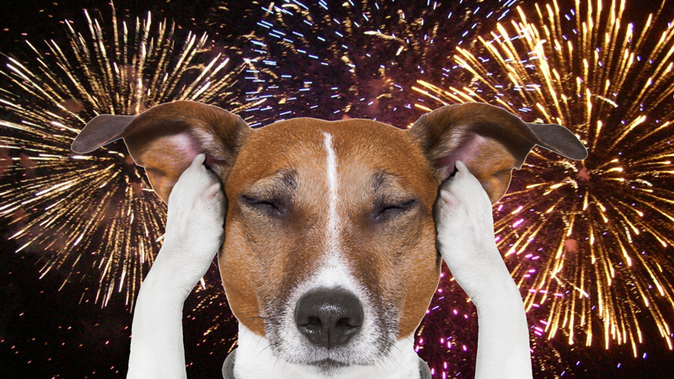 Keeping Your Pets Calm and Safe During the 4th of July