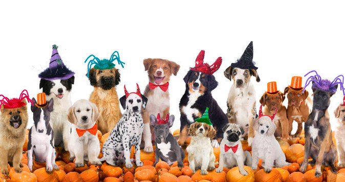 Tips on Including Your Pets This Halloween!
